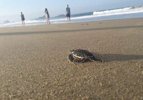 Sukamade turtle beach tour or sukamade adventure from banyuwangi
